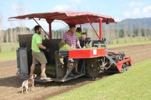 Turf growers and farms Australia