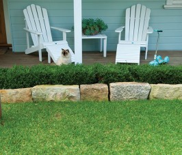 How Sir Walter DNA Certified Soft Leaf Buffalo lawns can help in the future of smaller backyards